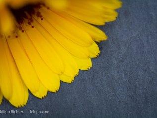 Projekt *Blume*